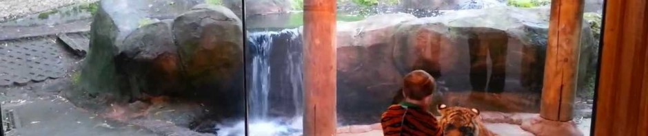 Tigre vs bambino vestito da tigre