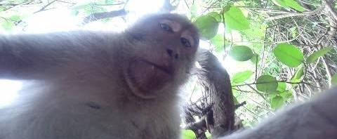 Il video selfie della scimmietta di Bali con la videocamera GoPro