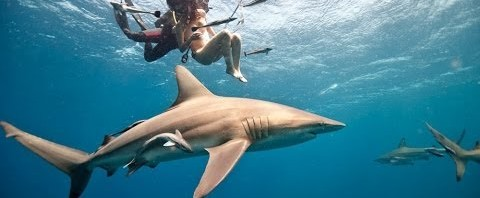 Lesley Rochat senza veli tra gli squali